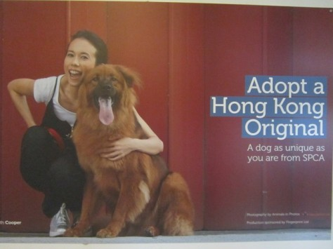 HK celebrity and serial endorser of NGO's, Karen Mok (and her dog)